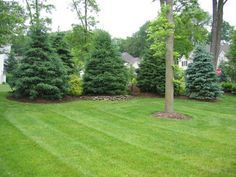 landscaping along fences | Warren, NJ – Softening & Privacy Screening | Parker Homescape