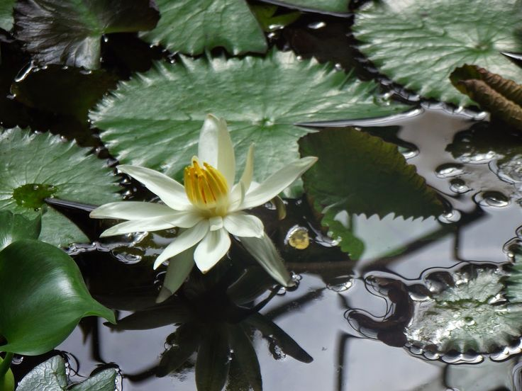 """Calator hai –hui – Grădina Botanică """"Vasile Fati"""" Jibou ~ Bucate, vorbe şi arome"""