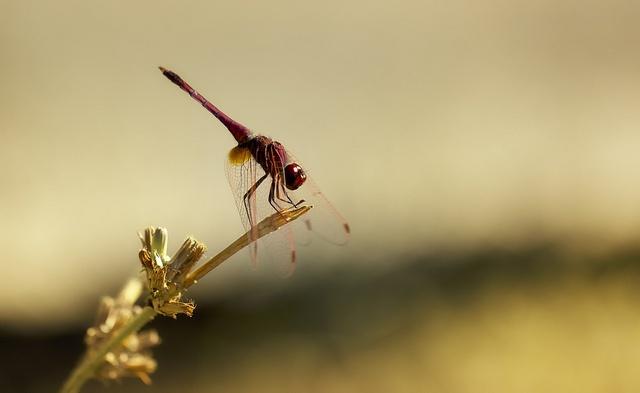 DragonflyPhotos, Damselfly, Dragonflies