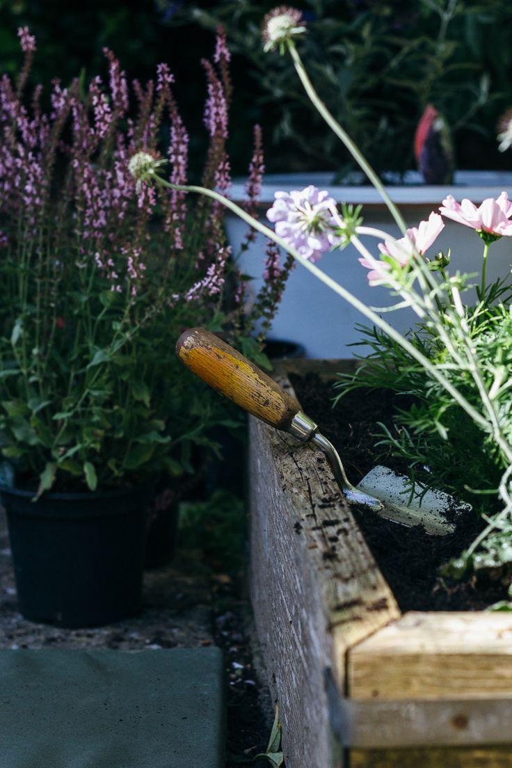 Butterfly friendly plants - part one, on Geoffrey & Grace