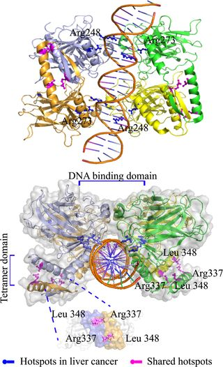 Protein Domain-Level Landscape of Cancer-Type-Specific Somatic Mutations