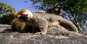Madagascar Tours & Car rental company! Book your tour for madagascar and discover baobabs tree,lemurs,fossa....