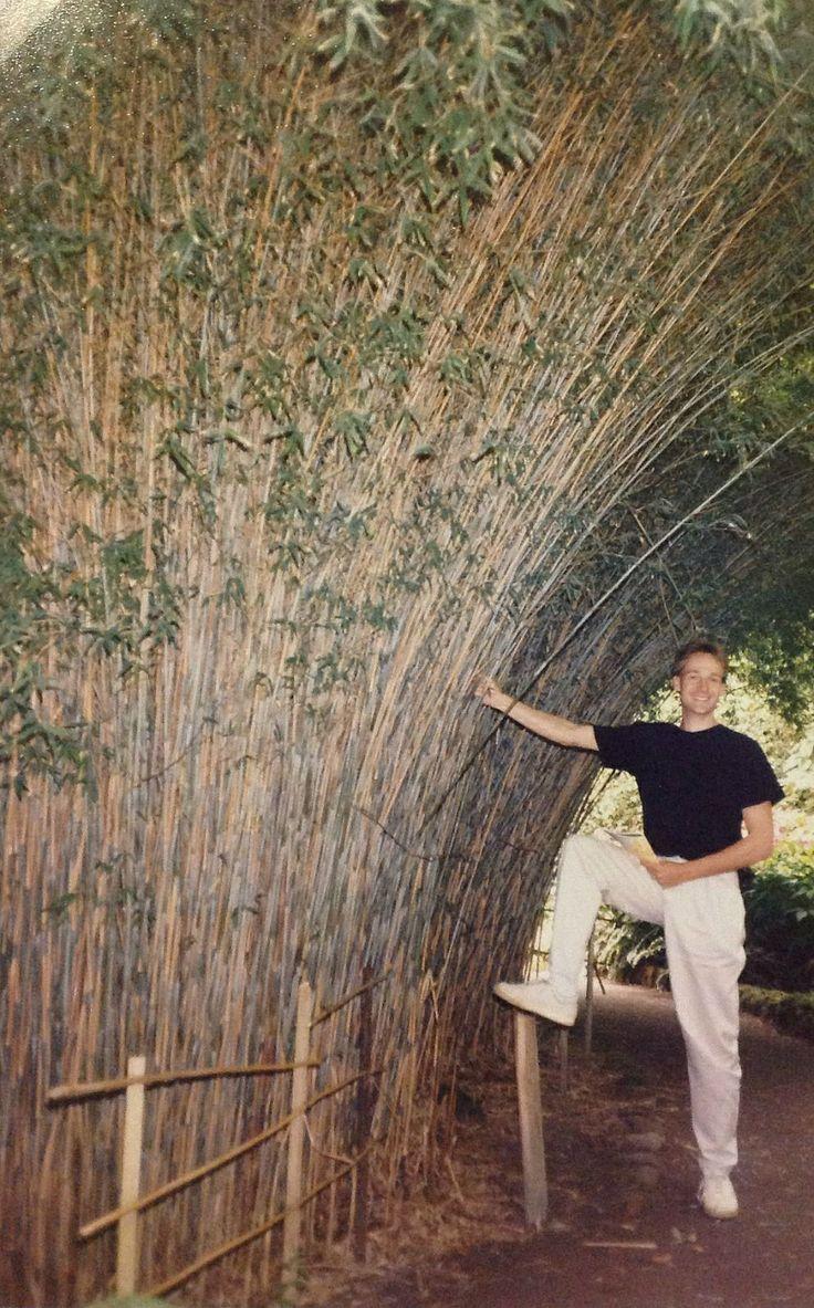Bamboe in de Schotse hooglanden aan de westkust. Vanwege de invloed van de relatief warme Golfstroom is dat hier mogelijk. (1987)