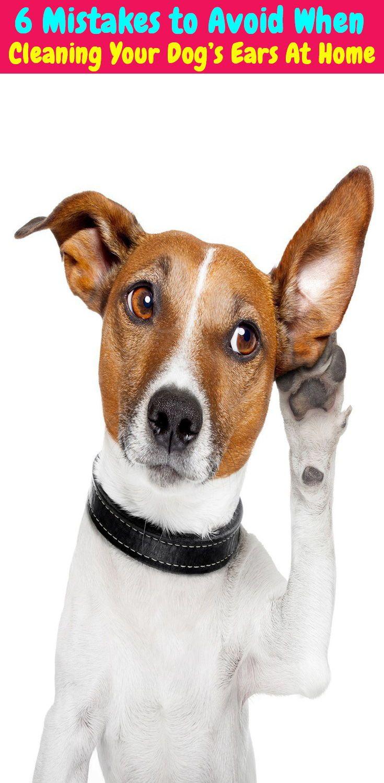 stuff to clean dog's ears
