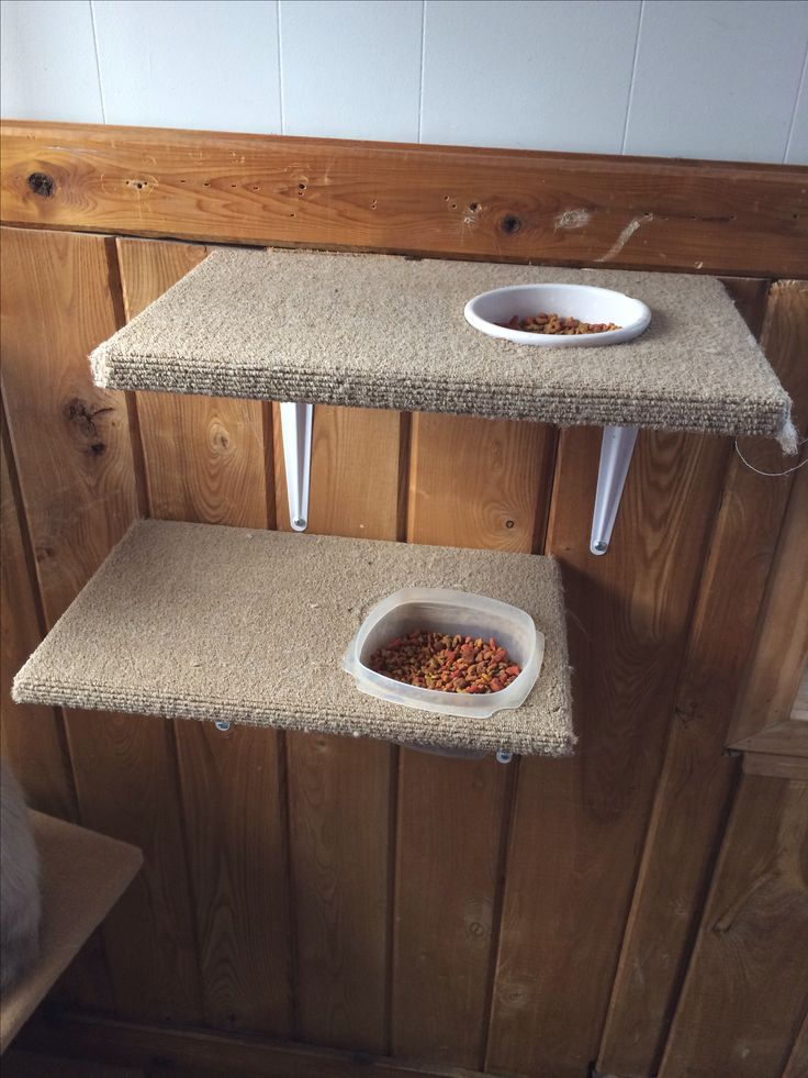 ♥ DIY Cat Stuff ♥  Cat food perch made out of an old cat scratching tree post. I cut holes in it big enough for the food dish to slide in but not slide through & bought a few shelf brackets & attached them & hung them on the wall! Now the cats can eat up where they like to be & the dogs can't eat their food.