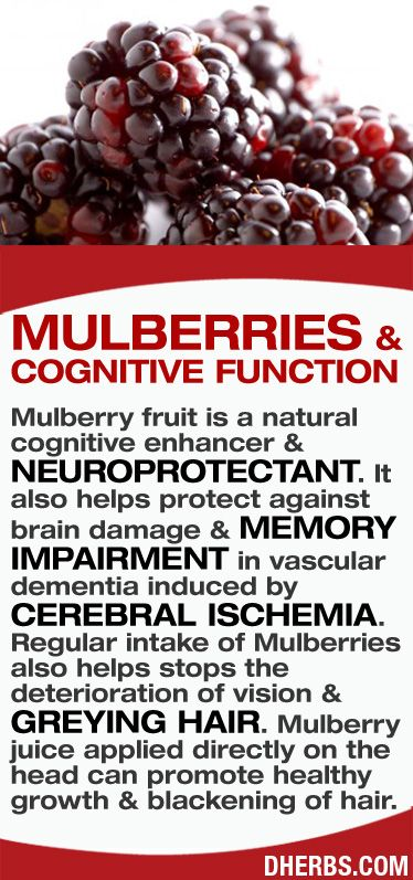 Mulberry fruit is a natural cognitive enhancer & neuroprotectant. It also helps protect against brain damage & memory impairment in vascular dementia induced by cerebral ischemia. Regular intake of Mulberries also helps stops the deterioration of vision & greying hair. Mulberry juice applied directly on the head can promote healthy growth & blackening of hair. #dherbs #healthtips