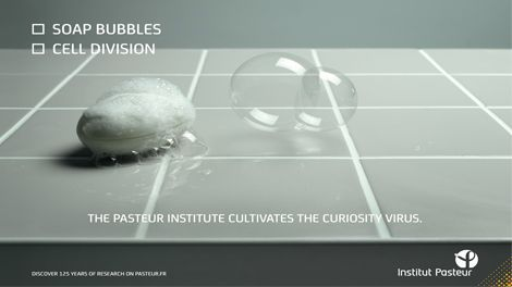 Agence Babel | Institut Pasteur