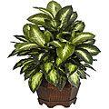 Golden Dieffenbachia Silk Plant | Overstock.com Shopping - The Best Deals on Silk Plants