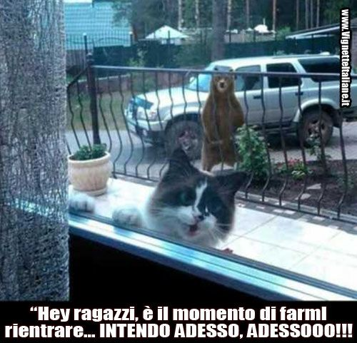 http://www.vignetteitaliane.it #vignette #immagini #divertenti #italiano #lol #funny #pictures #italian #cats #bear