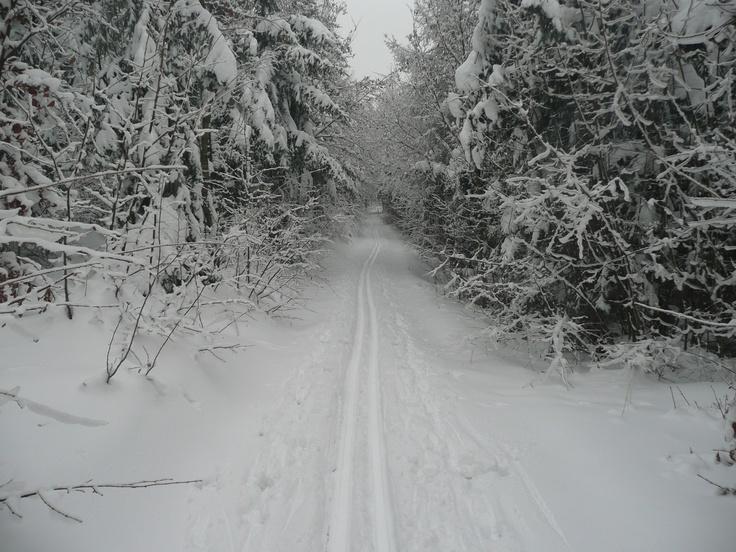 Czech - cross-country ski trail