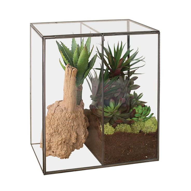 Offer a glimpse of prized greenery with this Arbor Day Glass Terrarium, a handy and decorative venue for displaying succulents and other beautiful plant life. Glass walls provide a crystal-clear view o...  Find the Arbor Day Glass Terrarium, as seen in the Fresh Industrial Style Collection at http://dotandbo.com/collections/fresh-industrial-style?utm_source=pinterest&utm_medium=organic&db_sku=112632