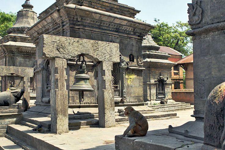Monkey surveys his domain at Gorakhnath Temple in Kathmandu, Nepal