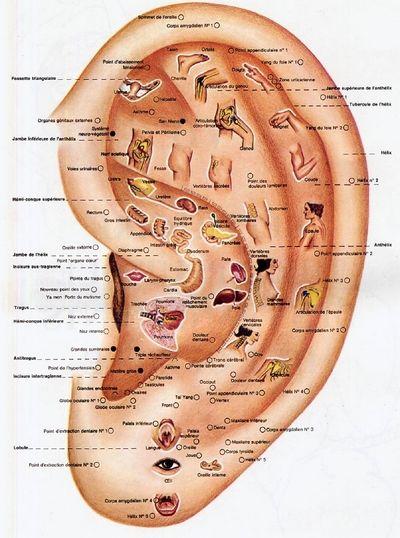 Auriculothérapie L'Auriculothérapie est une technique thérapeutique complémentaire à tout autre traitement. Elle consiste à traiter des points sur les pavillon