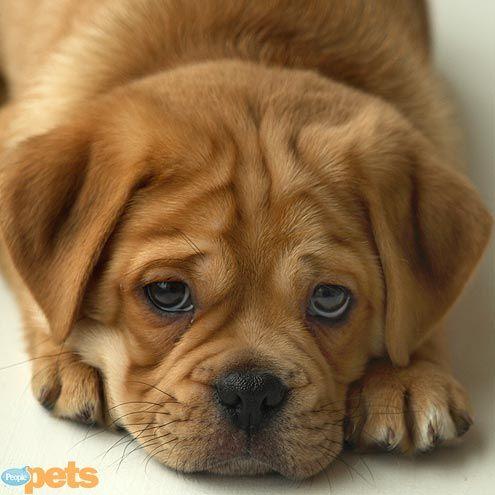 sad face | Animal Lover Sad Animal Face