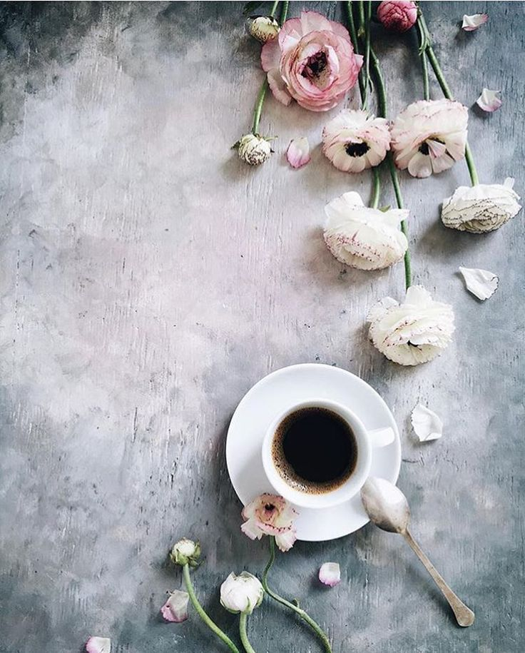 "coffeeandseasons on Instagram: ""Hello coffee or tea lovers !!! Today the feature is by @evgeniya .prinsloo We Love going through all of your pictures tagged #coffeeandseasons or #teaandseasons So many great compositions ! Congrats Evgeniya for this beautiful picture !!! Thank You for sharing ************************************** Selected by: @clangart"""
