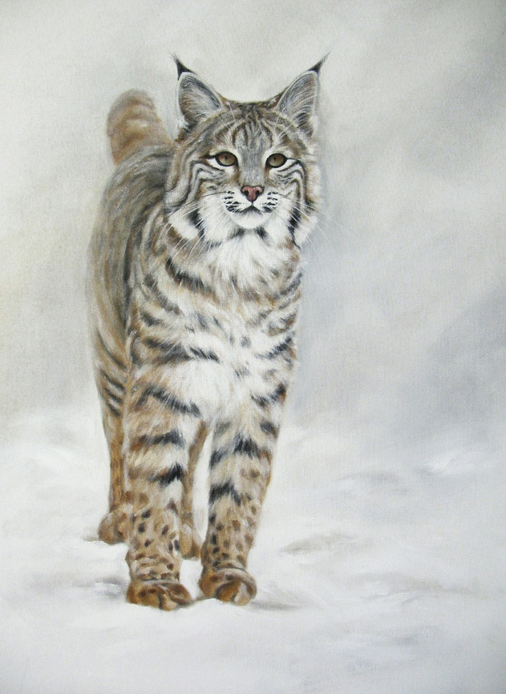 This beautiful bobcat is wearing his winter coat, I painted this with acrylics on canvas. He is in a new home up in the forest and so happy!