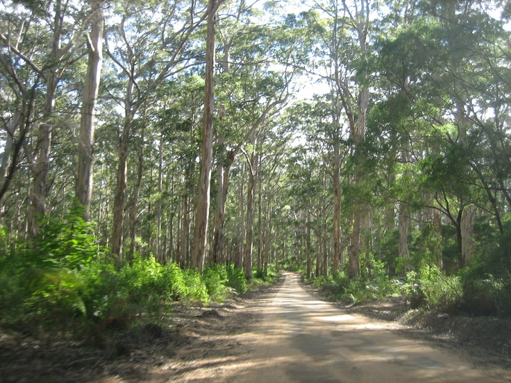 Typical old dirt road through the Australian  bush.