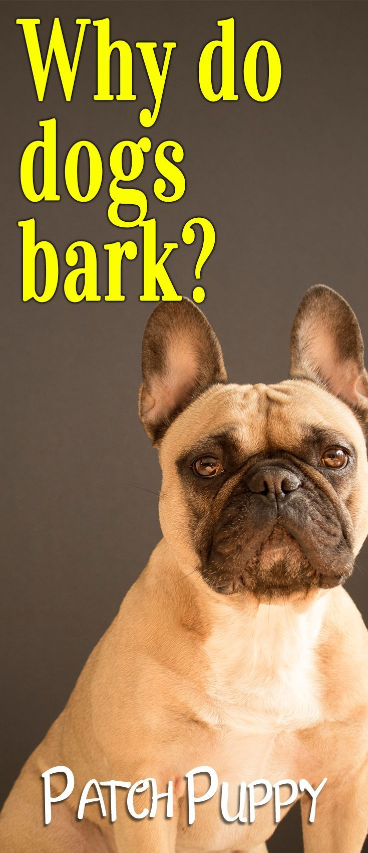 Why Do Dogs Bark Dog Barking Training Your Dog Dog Training