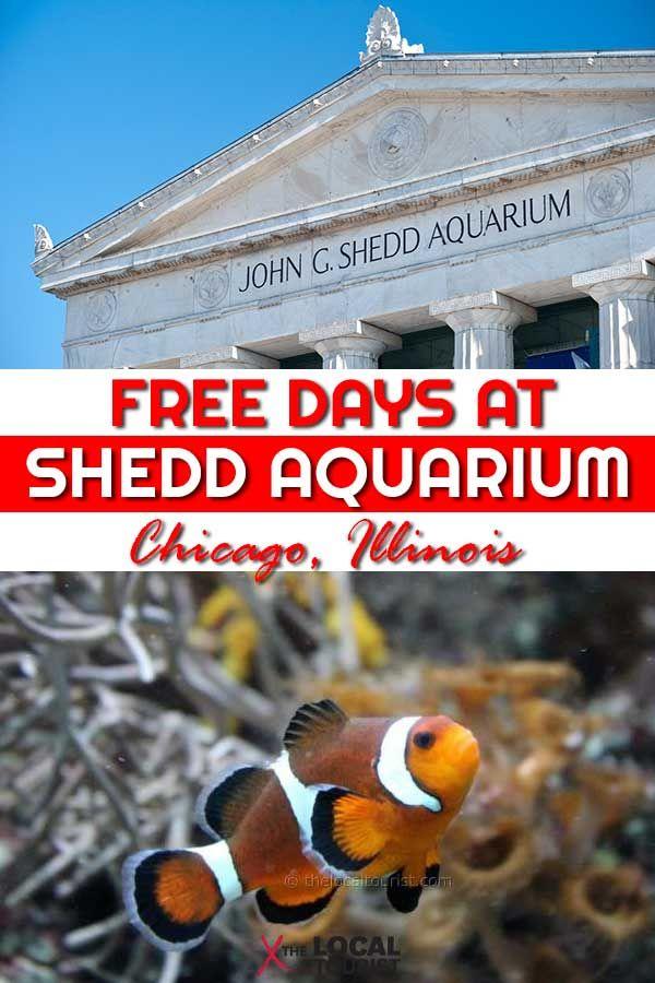 Visiting Shedd Aquarium Free Days