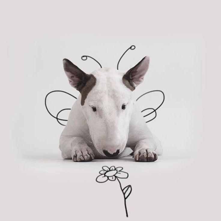Une nouvelle série desphotos Instagram de Rafael Mantesso, qui s'amuse à mettre en scène son adorable Bull Terrier grâce à un fond blanc et quelques trai