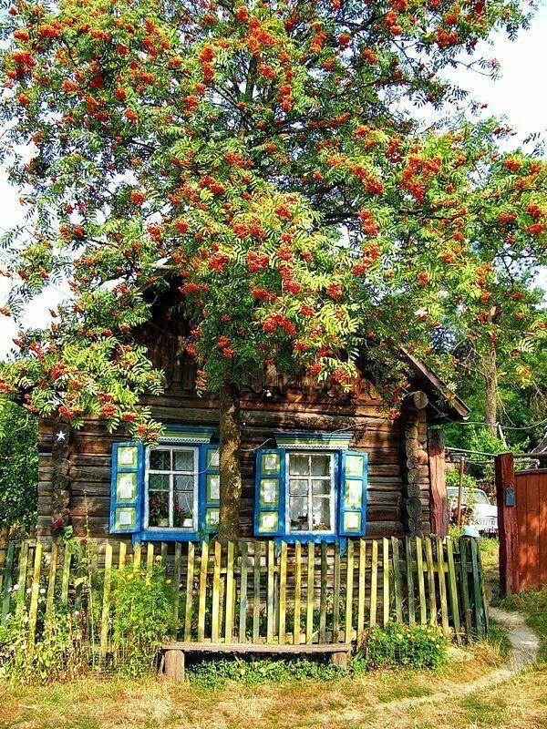 Осень в деревне | Живописные пейзажи, Деревенские ...