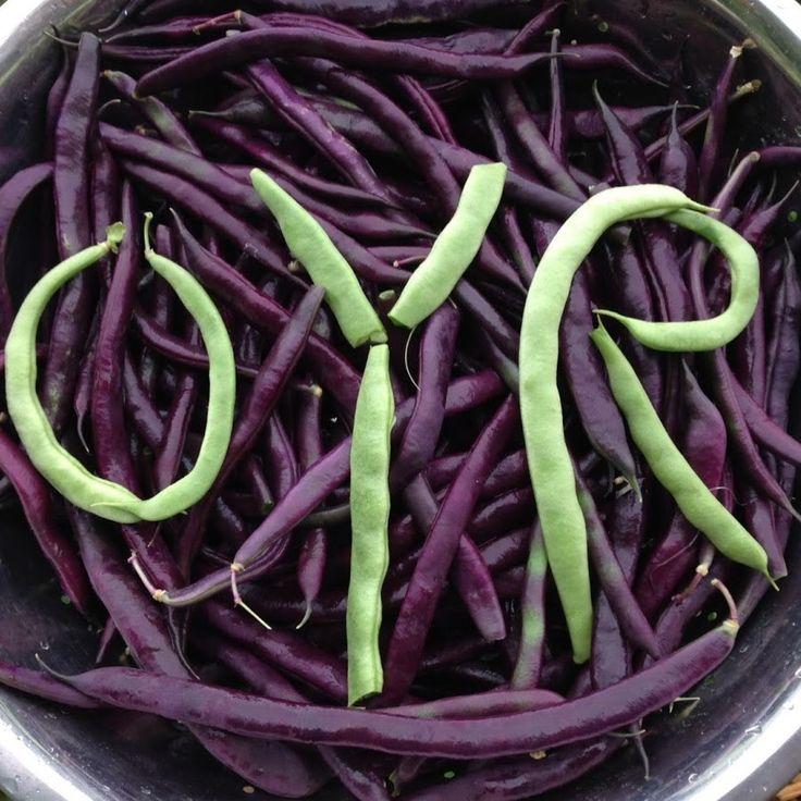 OYR Frugal & Sustainable Organic Gardening