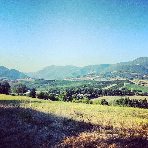 #verdicchio #wine #marche #italy #countryside