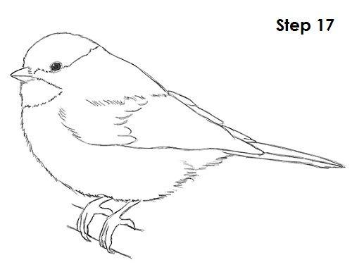 Chickadee Bird Drawing 17