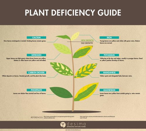 effects of plant nutrient deficiency Identifying plant nutrients and calcium deficiency symptoms in hydroponic nutrients is the big thing in hydroponic gardening check out how to find deficiencies in your hydroponic nutrients.