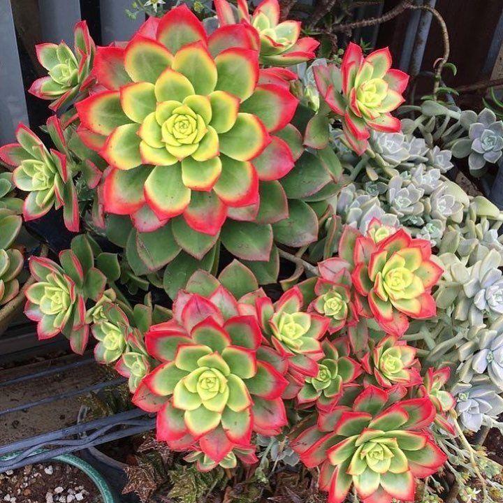 𝓝𝓲𝓺𝓕𝓮𝓻𝓷𝓪𝓷𝓭𝓮𝔃 Plante Succulente Deco Plantes