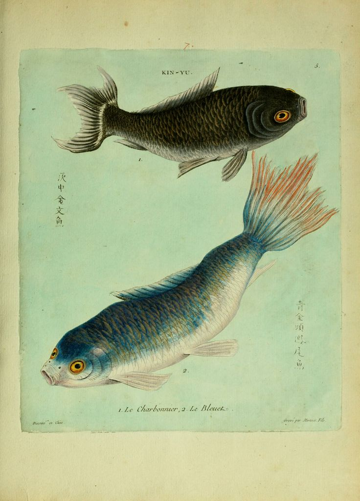 Histoire naturelle des dorades de la Chine / Biodiversity Heritage Library