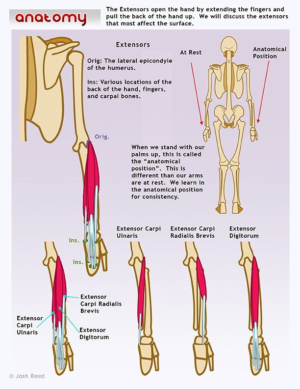 56 Best Grip Strength Images On Pinterest Electric Power Exercise