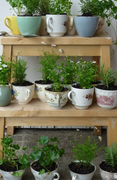 Teacup herbs... succulents would be cute too!