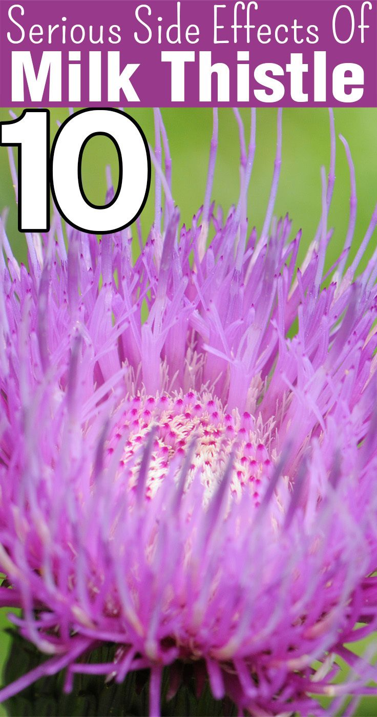 Milk thistle is widely known for its health benefits. Despite all the benefits, milk thistle comes with a warning tag! Here are side effects of milk thistle