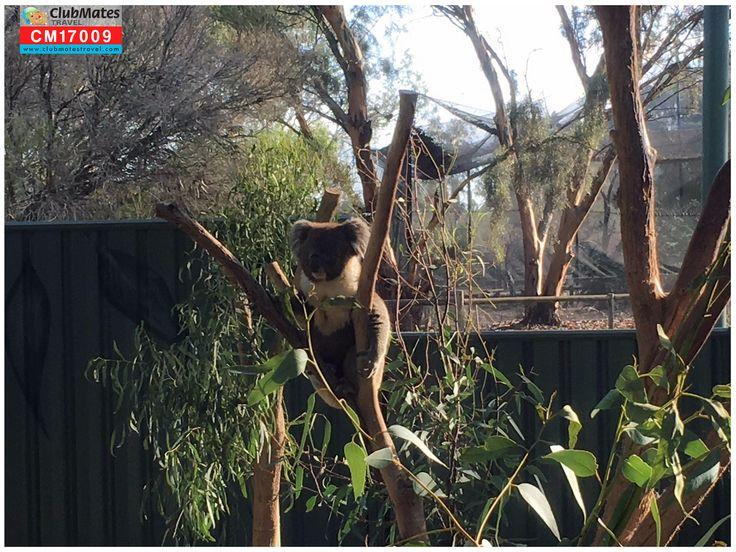 @Kyabram Fauna Park