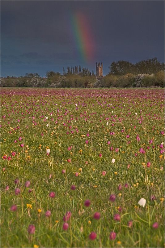 An evening rainbow reflects the colours of the meadow above St Sampson's church in Cricklade. St Samson, by the way, was a 5th century missionary priest who braved various celtic fringes, Cornwall, Brittany, Ireland and Wales. Why he is remembered in this Wiltshire church dating back to Saxon times I'm not sure. Anyone able to help?