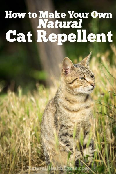 How To Make Your Own Natural Cat Repellent( I do need something not to hurt grandkids but keep stray cats from my lawn)