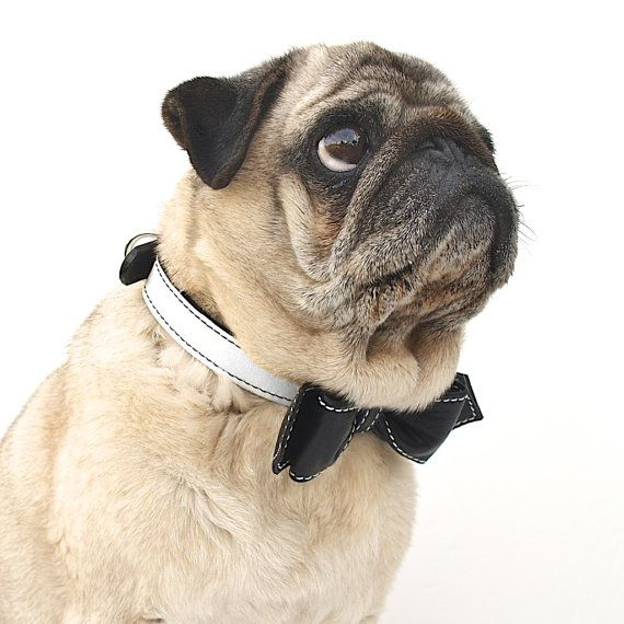 Hey, I found this really awesome Etsy listing at https://www.etsy.com/listing/87577833/dog-collar-black-and-white-oreeo-martini