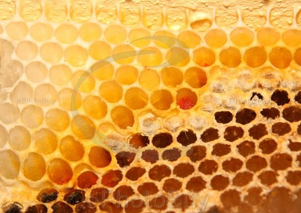 Close up picture of Bee hive