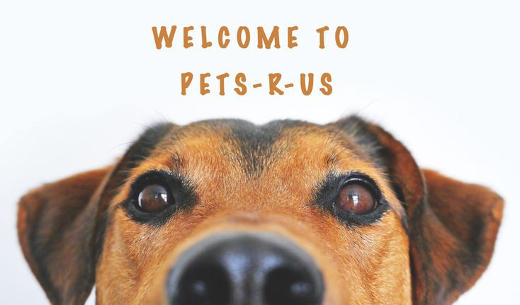 Pin By Pets R Us On Https Www Pets R Us Shop Dog Grooming Tools Dog Grooming Oils For Dogs