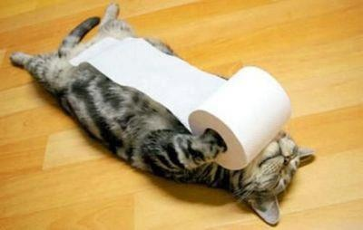 World Photos: Cats, Toiletpaper, Animals, Toilets, Funny, Crazy Cat, Kitty, Toilet Paper