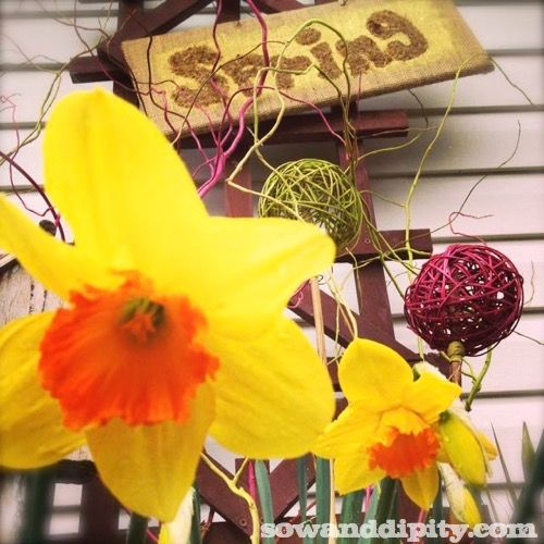 Forgot to Plant Those Spring Bulbs? It's Not Too Late! :)