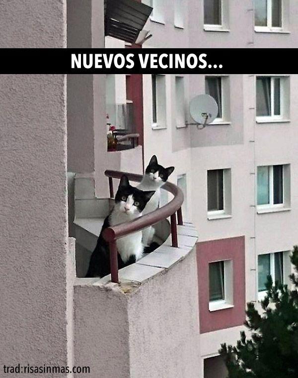 Nuevos vecinos…. #humor #risa #graciosas #chistosas #divertidas