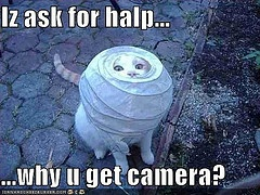 :D: Lamps, Paper Lanterns, Funny Pictures, Camera, Funny Cat Pics, Funny Animal, Chine Lanterns, Silly Cat, Cat Photos