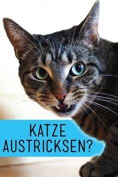Deine Katze will nicht so wie du willst? Mit diesem einfachen Trick können Katzen spuren - zumindest in einer Disziplin. // Tiere, Haustiere, Tricks, Tipps, Katze austricksen, Katze überlisten
