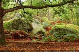 Image result for foret de fontainebleau