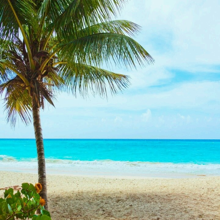 Barbados - Can't wait to go here!