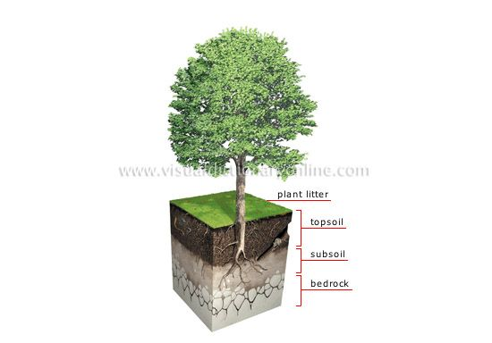 soil-profile.jpg (550×384)