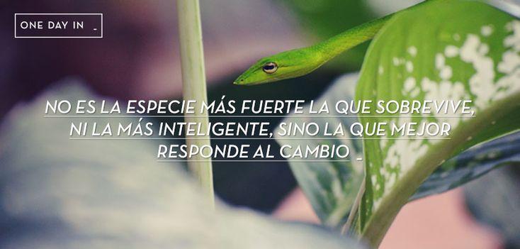 no es la especie más fuerte la que sobrevive, ni la más inteligente, sino la que mejor responde al cambio