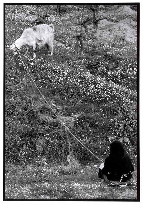 "Constantine ""Costa"" Manos (1934 South Carolina): Greece. Peloponnesus. 1964. Woman tending her goat. ""A Greek Portfolio"" p.97. © Costa Manos/Magnum Photos"